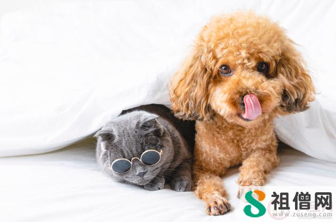 养宠物的人更快乐吗 为什么看到可爱的动物就想rua它